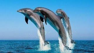 Шоу дельфинов Винперл (Vinpeal), Нячанг, Вьетнам