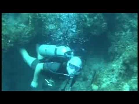Marine Life Divers Jamaica 2