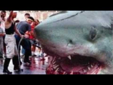 Megalodon Sightings Around the World!!! - YouTube