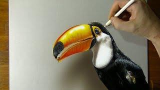 Speed Drawing: Toucan - 3D Art