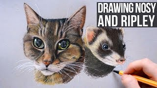 Drawing Nosy and Ripley | Cat and Ferret Pet Portrait