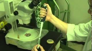 ガラス化で凍結保存された胚の融解方法