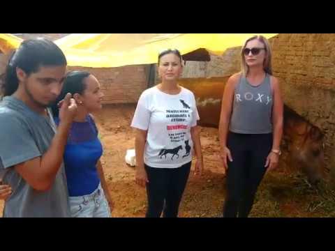 O cavalo Frederico, abandonado em Sapucaia do Sul, recebe ajuda da comunidade