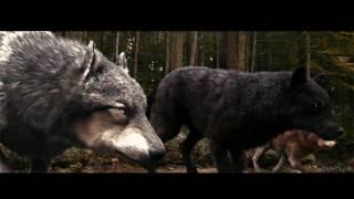 wolf amv it has begun