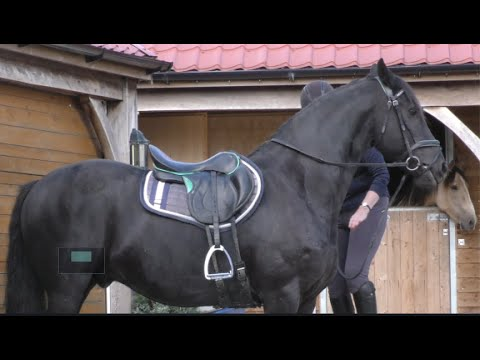 Download It must be well Over a Year since I Rode Apollo