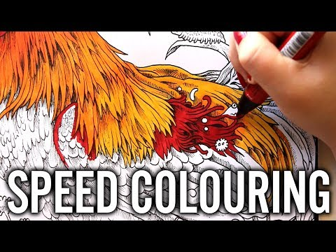 ANIMORPHIA SPEED COLOURING ~ ROOSTER