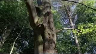 bbc earth  ducks remix