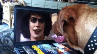 Angus Loves Frank-n-furter
