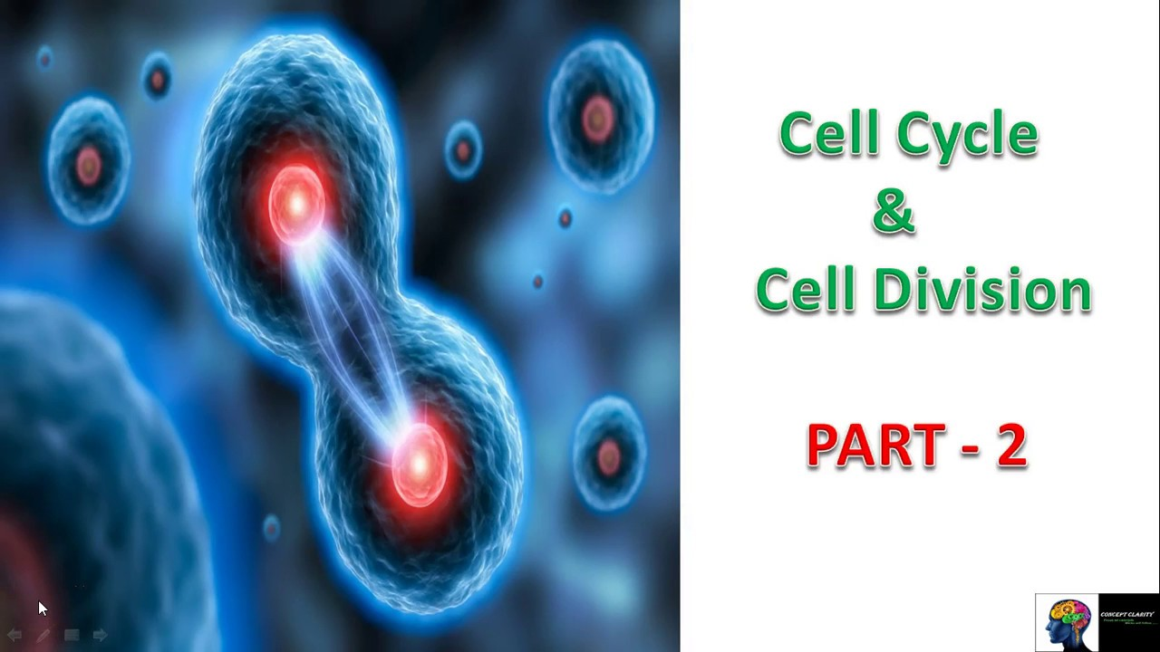biology cell division cycle Cell division is an open access journal that allows the cell biology and cancer research communities to come together and focus on cross-sectional research related to.
