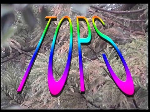 TOPS | Destination