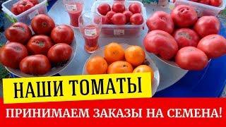 видео Помидор