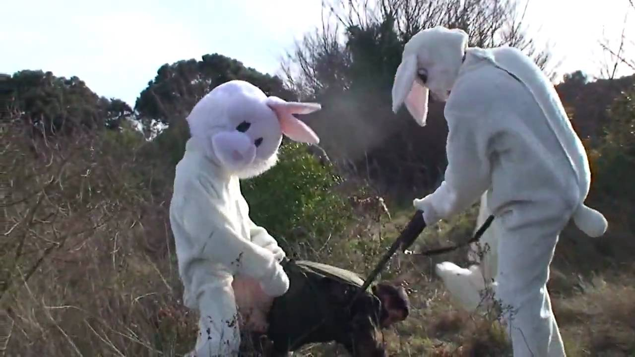 how do you keep rabbits out of your garden evil rabbits youtube