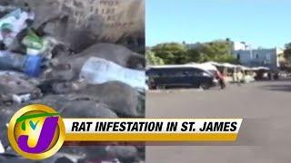 TVJ News: Garbage Pile-up | Rat Infestation in St James (Midday News) MAR 18 2019