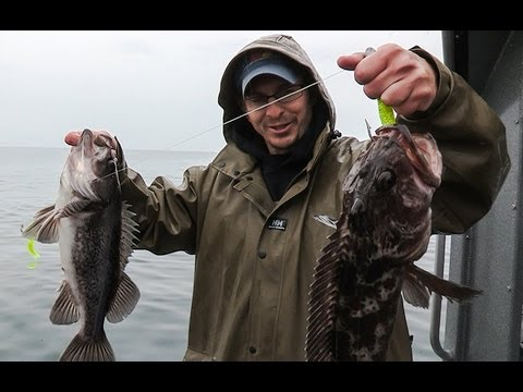 Oregon Coast Rockfish & Lingcod