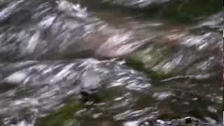 Nature videos HD 2013 new Don
