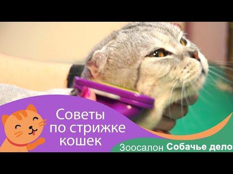 ��Стрижка кота в зоосалоне Собачье дело