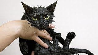 Funny Cats Hate Baths  Funny Cat Videos