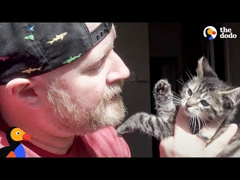 Man Falls In Love With Fostering Kittens | The Dodo