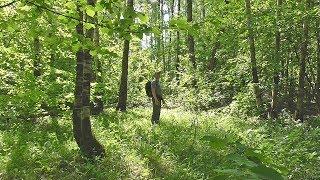 Москва. Поход в лес не выходя из города.