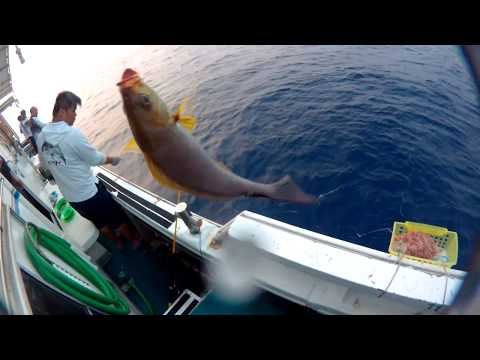 Hong Kong Offshore  Fishing - Bait cage day time 1 (2/10) ボート釣り