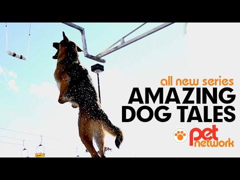 Amazing Dog Tales Trailer