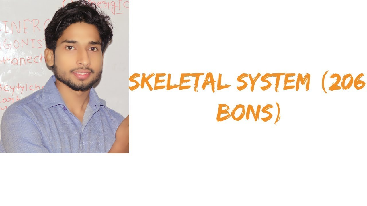 Learn In Hindi Skeletal System 206 Bones Youtube