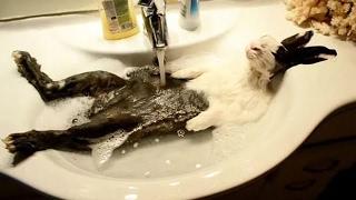 Смешные животные #4. Водные процедуры