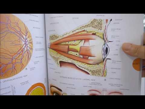 ATLAS OF HUMAN ANATOMY - YouTube