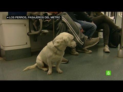 Así podrá viajar tu perro en el Metro de Madrid