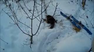 Зимняя охота на бобра с ружьем