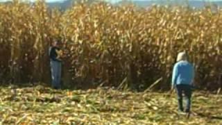 The corn is as high as an elephant