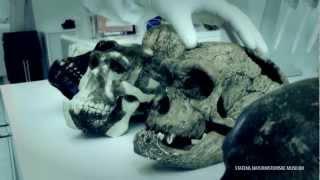 Menneskedyret - Tænder og DNA