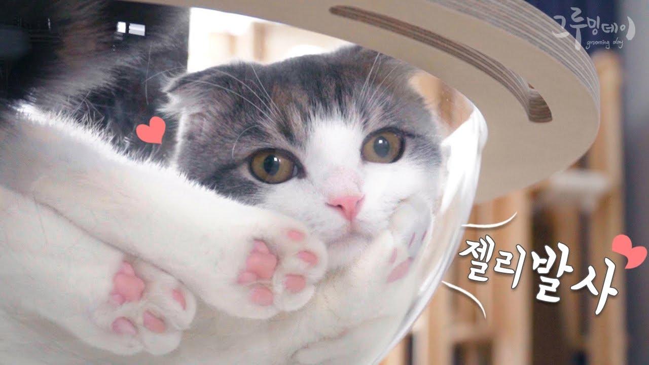 고양이 발바닥 투명하게 보면 더 귀여워요 cat paw