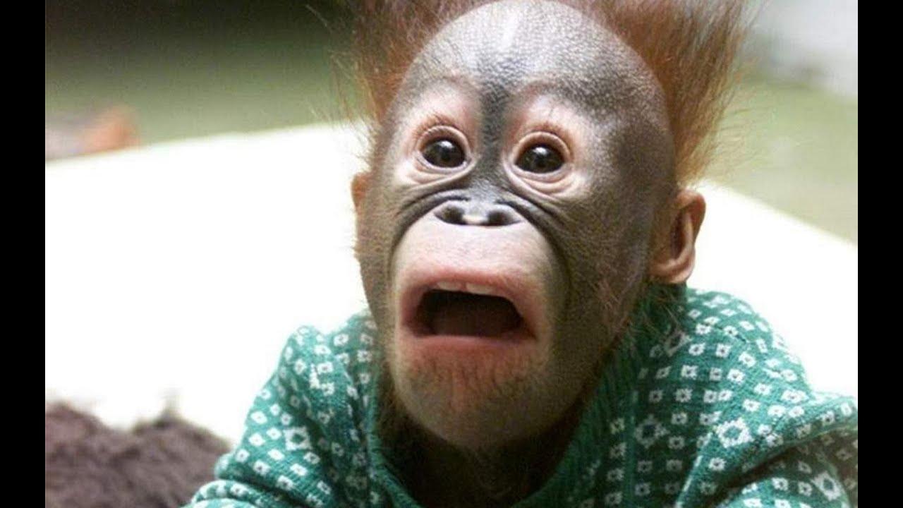 Смешные Видео:смотреть Приколы про Животных|ржачные приколы про животных смотреть онлайн