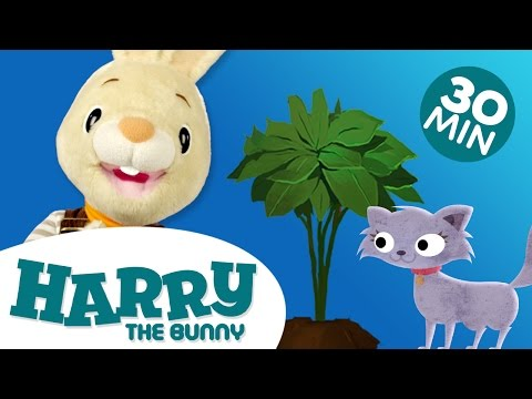 Learning for Children - Understanding Pairs with Harry the Bunny | Educational Videos for Kids