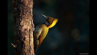 Uttarakhand trekking and bird photography, #Bhimtal #Nainital #Sattal #Birding