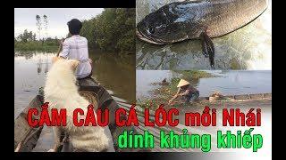 Cắm câu cá lóc bằng mồi nhái mùa nước nổi | Snakehead fishing with frogs in flooding season