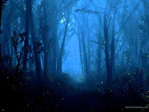 Real fireflies in a field