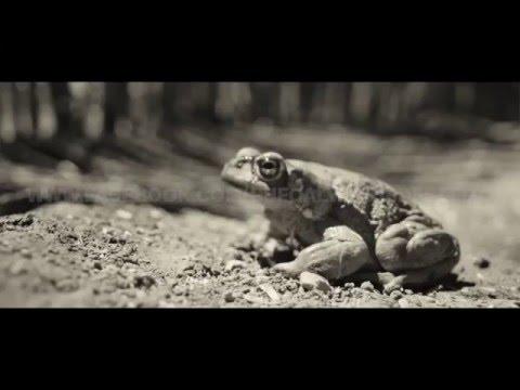 Sonoran desert toad Medicine & the Brain