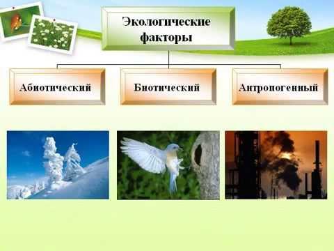 Среда обитания организмов и ее факторы.AVI