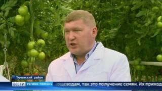Томаты, перцы и баклажаны будут выращивать в теплицах в Тюменской области