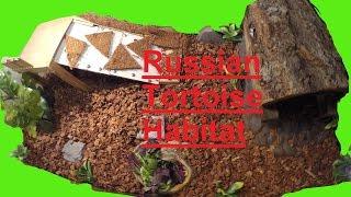 Russian Tortoise Habitat Setup (40 Gallon Breeder)