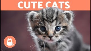 Cute and Funny Cats to Improve Your Day 😻 Compilation ❤️