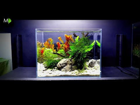 STEP BY STEP: How To Set Up A NANO Fish Tank, Shrimp Aquarium, Planted Tank