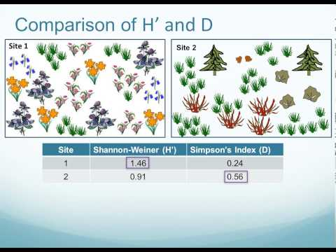 Plant Species Composition and Diversity