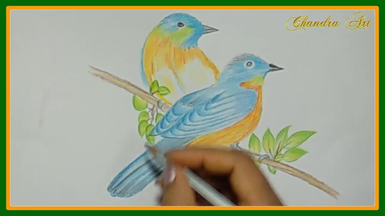Drawing a pair of beautiful birds with colored pencils