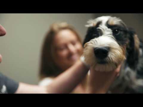 Waterloo Animal Hospital Waterloo Vet Den Herder Vet