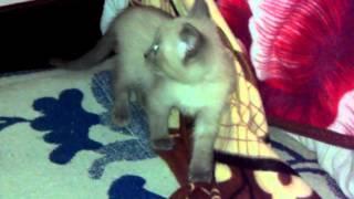 дурная рука кошке покоя не даёт:)
