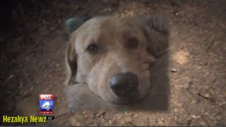 Missouri Police Officer Fears For His Life...shoots Little Golden Retriever To Death In His Own Yard