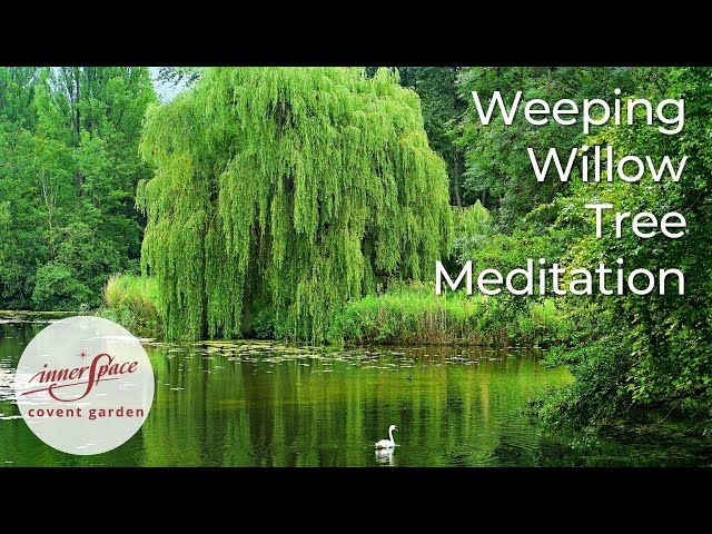 Weeping Willow Tree | Guided Meditation